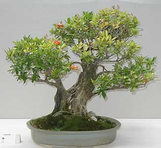 foto bonsai interior: