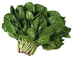 external image spinacia-oleracea-espinaca.jpg
