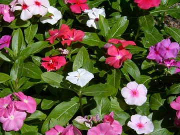 El reino plantae febrero 2012 - Plantas perennes exterior ...
